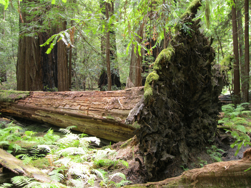 A Tree Falls in the Forest